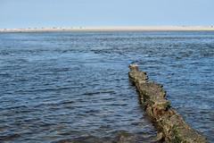 Weather (BlossomField) Tags: sea water deutschland deu sandbank borkum weatherbeaten niedersachsen
