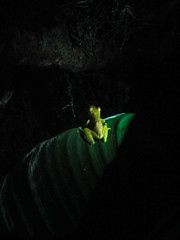 "Santa Elena: les étangs à grenouilles by night <a style=""margin-left:10px; font-size:0.8em;"" href=""http://www.flickr.com/photos/127723101@N04/26902271562/"" target=""_blank"">@flickr</a>"