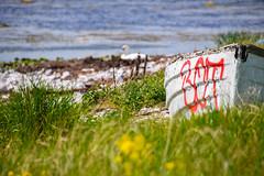 By the sea (Maria Eklind) Tags: sea sky beach nature grass strand se countryside boat skne swan sweden outdoor stones himmel sverige roads hav stersjn trelleborg svan landsbygd skneln