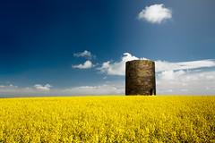 Plessey Farm Old Mill (Alistair Bennett) Tags: old morning summer mill windmill field yellow northumberland cramlington oilseed polariser canonef1740mm4lusm shottonlane plesseyfarm