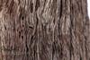 (robsall) Tags: africa vacation canon nationalpark sand desert redsand textures canon5d namibia canoneos sanddunes nama sossusvlei 1635 deadvlei 2015 namibdesert canonllens canon1635mm redsanddunes hardap namibnaukluftnationalpark canon1635 1635f28 1636mm canon1635mmf28liiusm canon5dmarkiii 5dmarkiii 5dm3 5dmark3 oldestdesert vastplace 5dmiii canon5dm3 canoneos5dm3 robsallphotography namibasanddunes