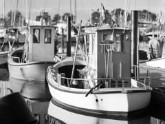Trusty Fishing Boats (LarsHolte) Tags: mamiya mamiyac330 tlr twinlensreflex twinlens mamiyasekor 180mm f45 super 6x6 film analog foma fomapan 100iso mediumformat analogue blackandwhite classicblackwhite bw monochrome filmforever filmphotography compardr09spezial r09spezial rodinalspecial studional larsholte homeprocessing lenstest nivå marina nivåhavn denmark fishingboat fomapan100professional fomapan100 120 ishootfilm 120film