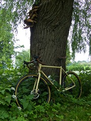 iconX_  20162016-06-1314-10-39 (C_Baltrusch) Tags: olive crossroad crossbones kafue madeofsteel stahlrad veloheld iconx bikespresso