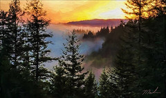 Sunrise in the Humboldt Mtns (fotomark.net) Tags: trees color fog sunrise forrest digitalpainting humboldtcounty