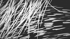 Indian crested porcupine (5500km) Tags: blackandwhite bw texture animal closeup rodent belgique noiretblanc be spines rongeur hystrixindica brugelette piquants indiancrestedporcupine indianporcupine rgionwallonne pairidaiza porcpicindien