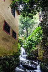 Funchal Municipal Garden (JJ Photog) Tags: bridge trees plant flower fern building tree fall portugal window leaves rock wall architecture creek river garden island waterfall leaf support stream lily manmade monte plantae madeira municipal funchal