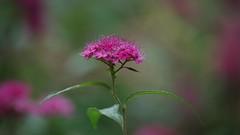 Jardin des plantes - Toulouse (31) (FloLfp) Tags: plante jardin toulouse flore gardin