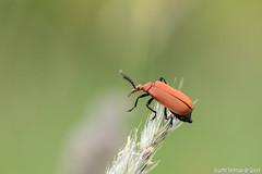 DN9A8601 (Josette Veltman) Tags: macro nature canon bug natuur bugs photowalk lente zwolle landschap insecten ivn westerveldsebos photowalkzwolle