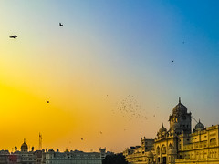 Evening Flight (Dovid100) Tags: india birds punjab amritsar goldentemple iphone