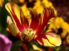 2016-05-22 (Gim) Tags: warszawa warsaw warschau varsovie botanicalgarden jardinbotanique ogrdbotaniczny rdmiecie mazowsze mazovia mazovie polska poland pologne polen gim guillaumebavirerdmiecie guillaumebavire