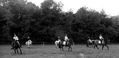 Ringridning in Nordborg (Landanna) Tags: bw horse white black denmark zwart wit dnemark danmark sort als hest hvid denemarken paard zw snderjylland nordborg ringridning zuidjutland ringridninginnordborg