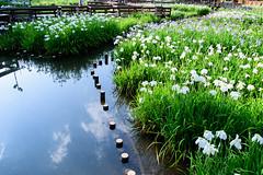 3Yamada Pond Park (anglo10) Tags: flower japan