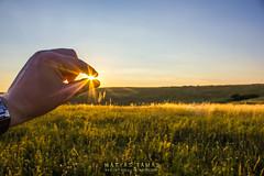 I got you! (ToMpI97) Tags: wild summer sun green nature field grass yellow hungary bokeh watch rays hang heves nagyvisny