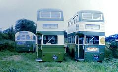 Slide 065-36 (Steve Guess) Tags: bus transport corporation regent regal ipswich parkroyal ict aec adx1 adx2 bpv11