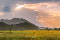 Y8917+19.0616.Kim Bi.Ha Bnh (hoanglongphoto) Tags: asia asian vietnam northvietnam northwestvietnam outdoor landscape afternoon sunset sky clouds hill field hillside hdr canoneos1dx tybc habnh kimbi ngoitri phongcnh vietnamlandscape phongcnhhabnh phongcnhvitnam buichiu honghn butri mmy my ngni sni cnhng honghntybc mountainlandscape phongcnhvngcao canonef70200mmf28lisiiusmlens cornfield cnhngng rungng peace treehill icy