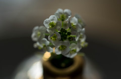 Tiny Bouquet (Captured Heart) Tags: flowers sweet bouquet posies alyssum whiteflowers