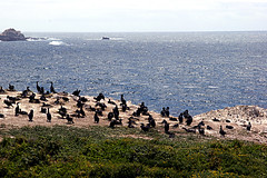 025-point lobos- (danvartanian) Tags: nature landscapes pointlobos
