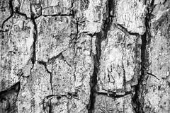 Good Old Wood (ElleFlorio) Tags: wood old bw white black macro tree nature lens textures reverse mondays reverselens flickrphotowalk macrotextures macromondays flickphotowalk lucaflorio
