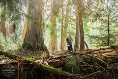 Ancient Forest - Prince George BC (Shauna Stanyer (Northern Pixel)) Tags: northernpixelphotography princegeorge britishcolumbia ancientforest engagementsession ancientforestprincegeorge bc canada princegeorgephotographers forest