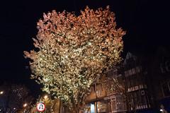 P1040129-tree lights (Mark Bukumunhe) Tags: tree night lumix lights ilkley gf1