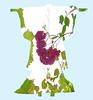 Kimono Old Wine and Rose Garden Alter Wein und Rosen Garten - Allotment Kleingarten at Ants` Brook - Grün Gegenlicht (hedbavny) Tags: garten garden gardenplot allotment wein weintraube weinrebe weinranke wine pflanze blatt leaf rose kitsch rosengarten laurin kimono gewand kleid kleidung kostüm schlafrock bademantel werden wachsen grow ast zweig laube tunnel sky himmel green grün red rot pink rosa blue blau himmelblau maigrün blossom blume flower blüte blühen sommer summer natur nature verlauf variation design pattern muster schnittmuster musterbogen sewingpattern paperpattern stencil schablone vogelscheuche scarecrow engel angel rosegarden weingarten ornament hedbavny ingridhedbavny wien vienna austria österreich