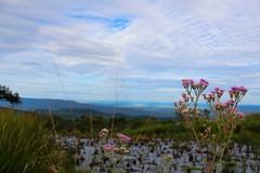 800 meters altitude - Estao Ecolgica Serra das Araras (Albedi Junior) Tags: nature canon natureza ngc cerrado matogrosso mirador maranho t3i natgeo serradasararas