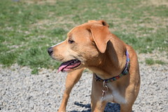 2016-05-07 10.25.30 (A Place for Paws) Tags: foster apap playday