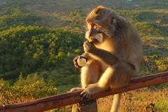 DSC02502 (Peripatete) Tags: bali mountains nature sunrise landscape volcano mount monkeys batur