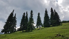 20160701_135524 (Anton Volnyanskyy) Tags: travel mountains green tourism nature forest ukraine carpathians поход природа лес горы украина карпаты туризм