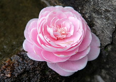 Braga (145) (Silvia Inacio) Tags: flower portugal fountain rose flor rosa fonte sanctuary braga minho bomjesus santurio bomjesussanctuary santuriobomjesus