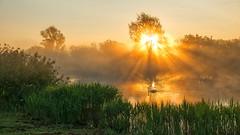 Dreamy moment (ShiyuZhuang) Tags: sunrise godrays bird swan morning weather dreamy crepuscular landscape nature sony lake flickr denmark herlev wetland mist fog smørmosen