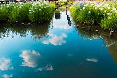 6Yamada Pond Park (anglo10) Tags: flower japan