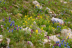 Summer in the mountains .... (martina.stang) Tags: flowers colorful meadow alpine catchy hcs explored inexplore