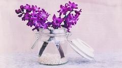 "hyacinth (G. H. ""Jerry"" White) Tags: hyacinth purple flower art topaz nic nik wallpaper"