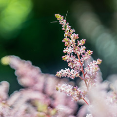 Out of the Clouds... (*Capture the Moment*) Tags: flowers white green dof bokeh pflanzen blumen grn 2016 weis helios442 farbdominanz