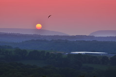 Flying to the Sun (Moniza*) Tags: county sunset sky mountain bird nature water silhouette forest sunrise landscape hope dawn newjersey jump twilight nikon state dusk jenny nj gap warren bluehour delaware d90 moniza