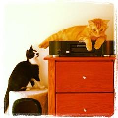 upload (merrickball) Tags: cat square kitten squareformat walden finnegan stinks iphoneography instagramapp uploaded:by=instagram