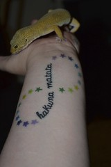 No Worries (faded-reality) Tags: cute tattoo tangerine stars reptile norbert lizard leopard gecko leopardgecko hakunamatata hypo noworries carrottail