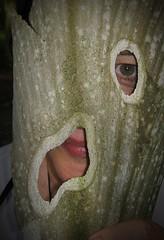 Sycamoran (Sea Moon) Tags: portrait macro eye face mask holes hidden bark