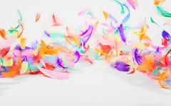sulka_tausta-Bergolli (Bergolli) Tags: light white holiday abstract motion cold color colors bag studio fly drops spring colorful bright wind feather brush blow backdrop eastern plume backround paasiainen tausta sulka hyhen