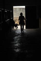 Frau und Hund; Seeth, Stapelholm IR9_2527 (Chironius) Tags: gegenlicht schleswigholstein deutschland germany allemagne alemania germania  szlezwigholsztyn niemcy sofiligran seeth nordfriesland