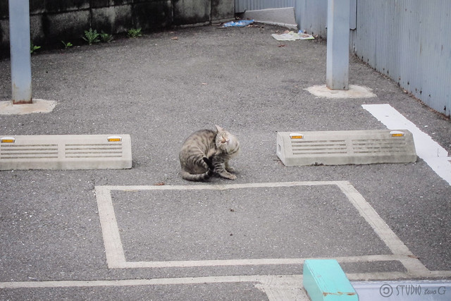 Today's Cat@2013-08-26