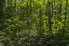 Park Life 4 (pni) Tags: park tree suomi finland leaf helsinki branch multipleexposure trunk helsingfors tripleexposure multiexposure skrubu pni pekkanikrus