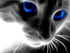 3D-Abstract-Animals-Cat-Face (vinod_pednekar) Tags: