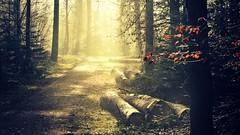This is Switzerland (FlavioSarescia) Tags: sun sunlight nature sunshine forest sunrise landscape schweiz switzerland woods shine wald sonnenaufgang hss happysliderssunday