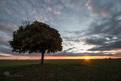 Dernier rayon (photosenvrac) Tags: landscape soleil photo paysage arbre couchdesoleil beauce marronnier thierryduchamp