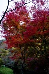暗い空と紅葉