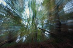 IMG_4220 (Chantelle G) Tags: trees light motion blur green nature forest canon landscape moss crazy movement woods action 360 trippy cirlcle 550d