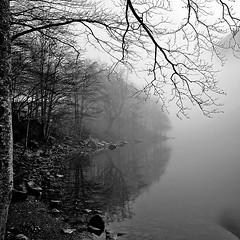 ognuno  solo (Claudia Gaiotto) Tags: trees lake fog forest reflections lago loneliness silence nebbia monocrome lagosanto brumes nebla