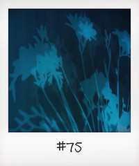 "#DailyPolaroid of 12-12-13 #75 • <a style=""font-size:0.8em;"" href=""http://www.flickr.com/photos/47939785@N05/11431804906/"" target=""_blank"">View on Flickr</a>"